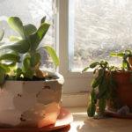 Emily Reinhardt ceramics with succullants