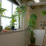 Plant corner! In Kathy's studio space.