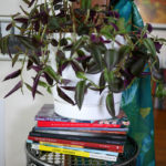 A plant balances on a stack of books